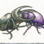 beetle-love-vfink