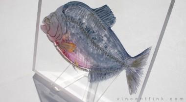 piranha3-vfink
